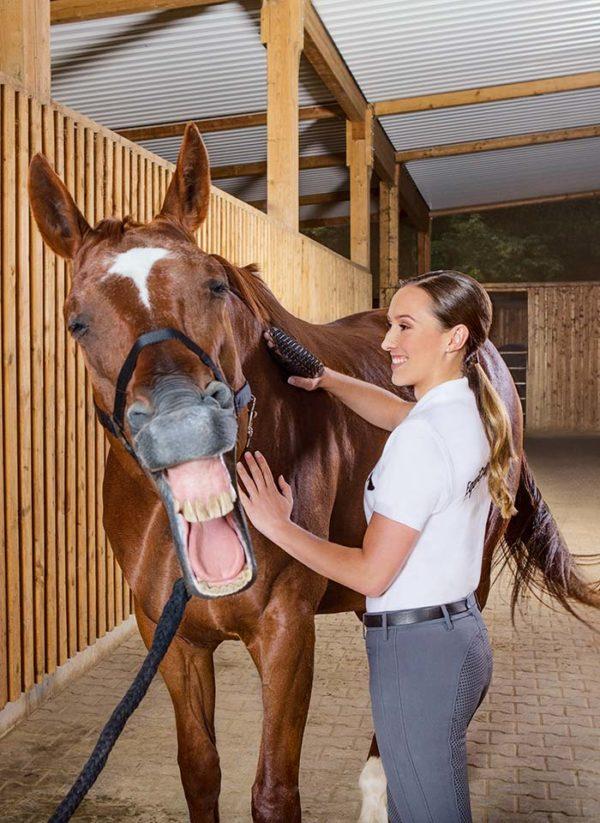 Lymphdrainageputzen beim Pferd mit Massagestriegel