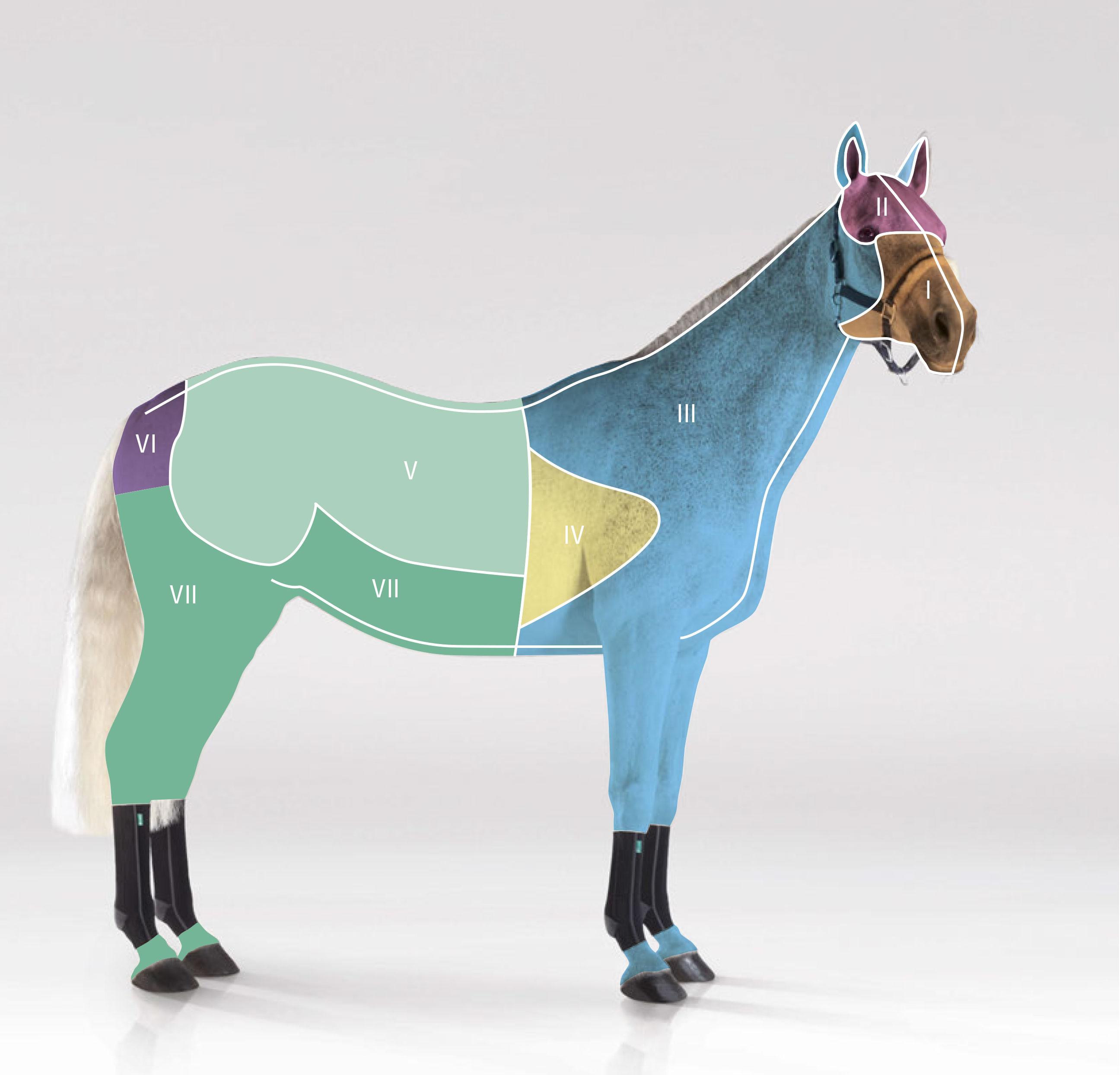 Das Pferd und sein Lymphsystem. Unterstützung mit Kompressionsbandagen.