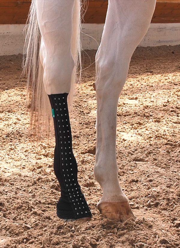Maßbandage für die Hinterhand des Pferdes