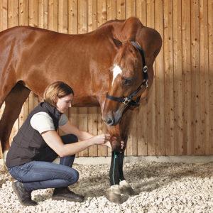Wann braucht mein Pferd eine Kompressionsbandage?