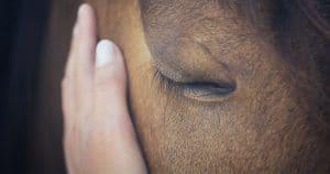 hautpflege beim pferd