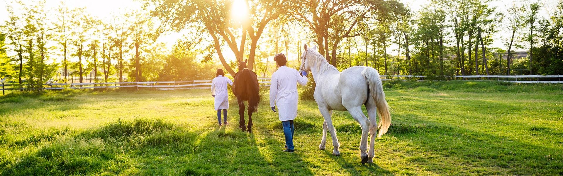 Zwei Tierärzte mit zwei Pferden