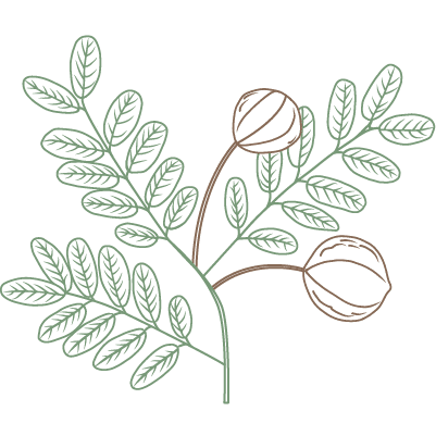 andiroba pflanze