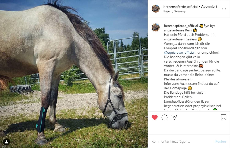 herzenspferde_official Influencer für Pferde auf Instagram