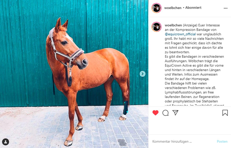 woelbchen Influencer für Pferde auf Instagram