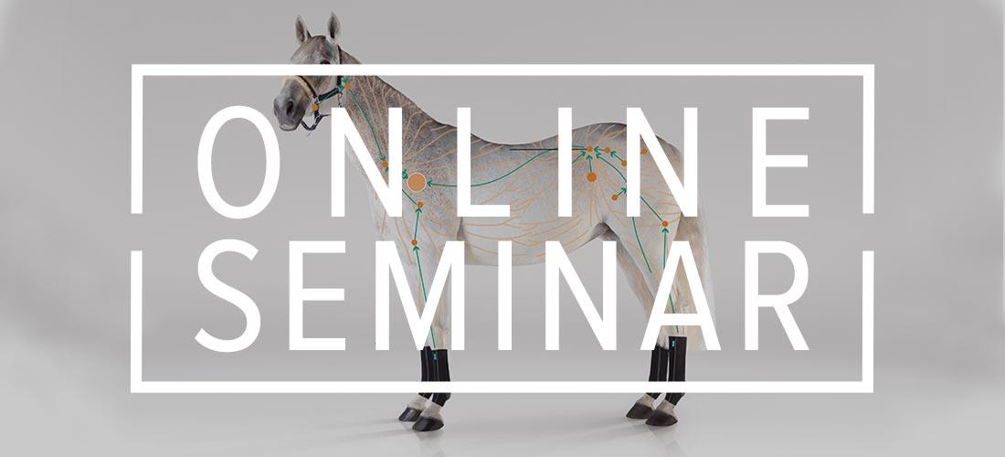 Online-Seminar Lymphsystem