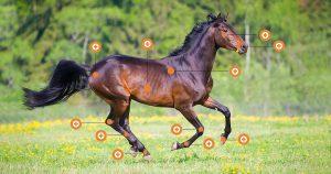 stoffwechselstörung beim pferd