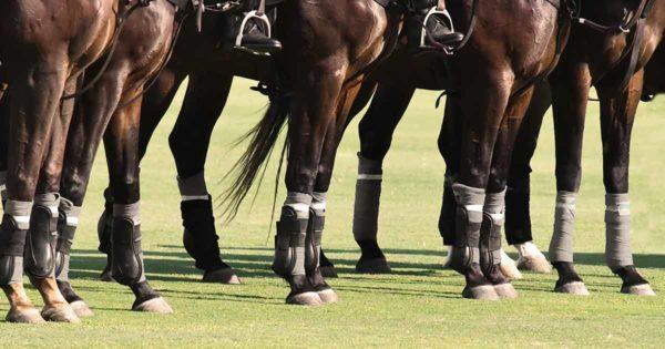 Mehrere Pferde tragen Gamaschen