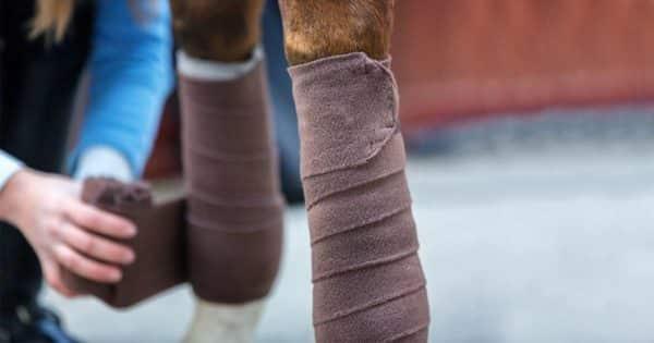Bandage an Pferdebein