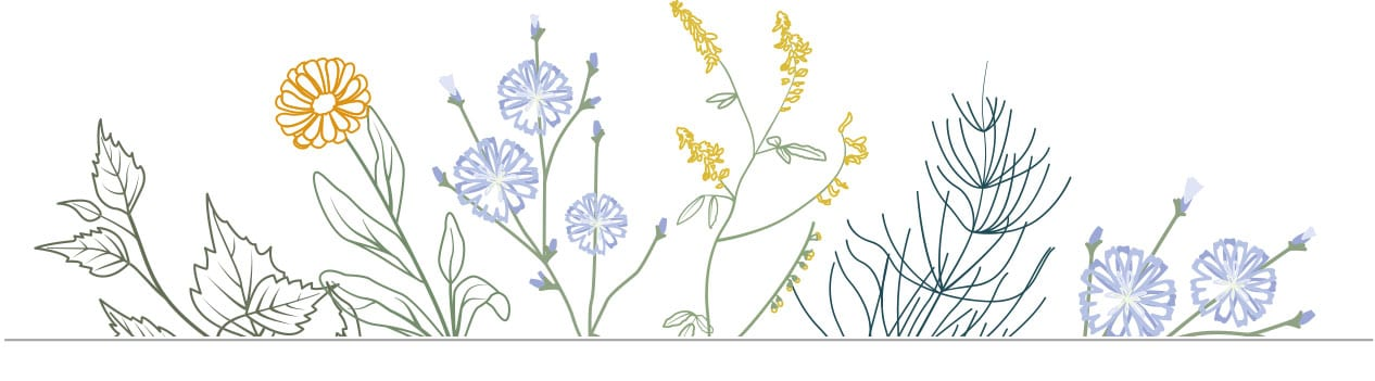 Lymph-Kräuter Illustration