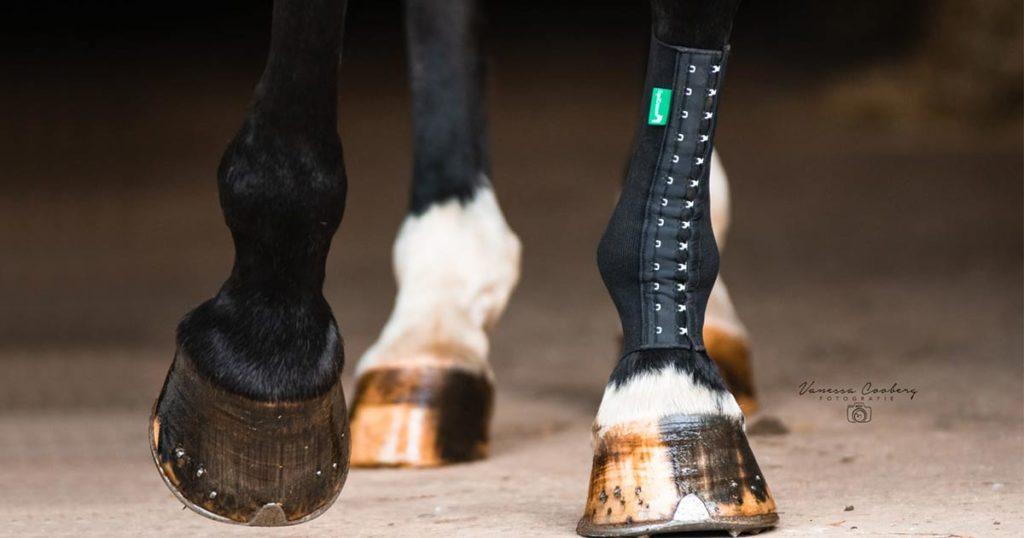 pferd trägt kompressionsbandage