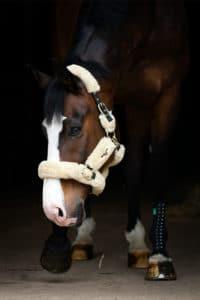 pferd mit kompressionsbandage