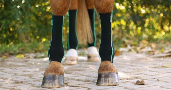 pferd trägt equicrown active