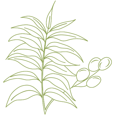 neembaum