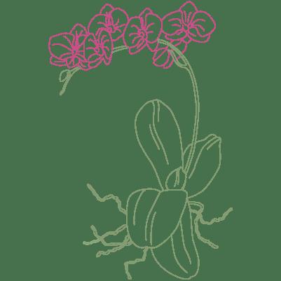orchidee pflanze